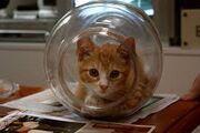 Cat in a jar.jpg