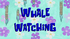 Whale Watching.png