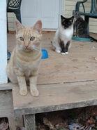 We Three Kitties