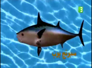 Arabicfish
