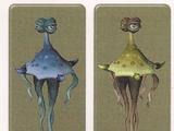 Тамаранская медуза