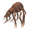 Spiderbaba.png
