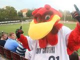 Cocky (University of South Carolina)