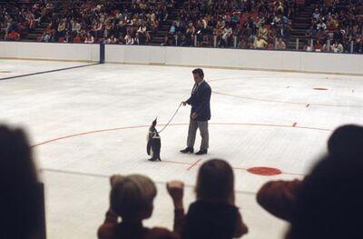 PenguinPete.jpg