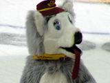 Harvey the Hound (Calgary Flames)