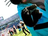 Mini Meow (Carolina Panthers)