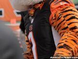 Who Dey (Cincinnati Bengals)