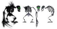 Yannick-corboz-shadow-apes
