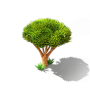 Dragon Tree.png