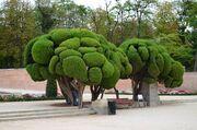 RealWorld Retiro Park Tree.jpg