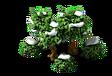Oak (Snow).png