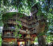 RealWorld Burgess's Treehouse.jpg