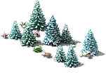 Blue spruce (Winter).png