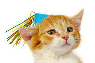 3687762-39441-kitten-with-hat