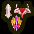 SSBU Dragoon Parts Model