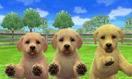 Labrador en Nintendogs