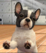 Bull dog Francés en Nintendogs & Cats