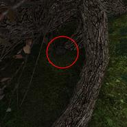 Plecak pod drzewem 3