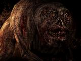 Cochon mutant