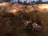 Лагерь на болоте