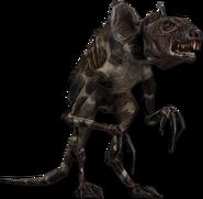 Rodent model