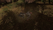 Dead red-forest valerian-1.png