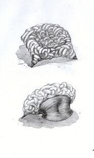 Artefact-moisey