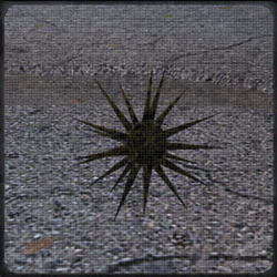 Кристальна колючка.png