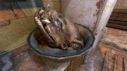Кабанья голова