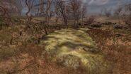 Берег болотца 2 (ЧН)