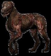 Blind dog model