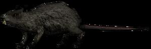 Крыса1.png