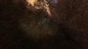 Дырявый пень Рыжий лес ЧН.png
