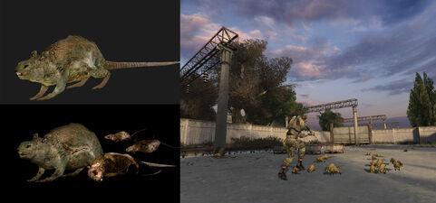 Rats collage.jpg