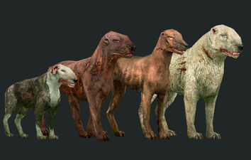 Dogs old visuals.jpg