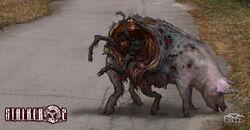 Art S2 old pig (v. 1).jpg