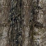 Texture-OL Wood cora256.png
