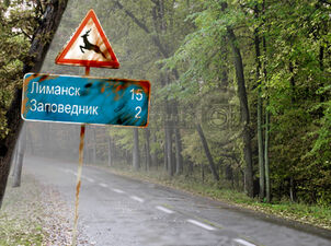 Red Forest Road.jpg