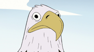 S2E10 Bald eagle with a blank stare