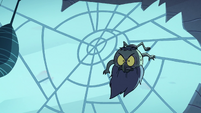 S2E2 Ludo crawling on spider web