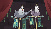 S3E20 King Pigeon squawking angrily