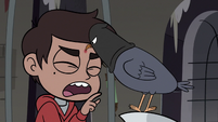 S3E20 Executioner pigeon pecking Marco's forehead