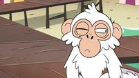 S4E2 White monkey slowly blinking