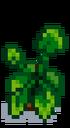 Комнатное растение 13