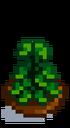 Комнатное растение 9