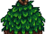 Семена карамболы