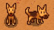 Собака 04