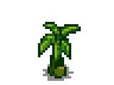 Саженец банана