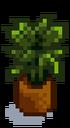 Комнатное растение 11