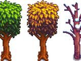 Семя красного дерева